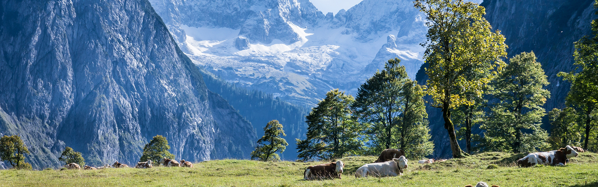 Bavarian-Alps-Cows-Nature
